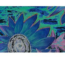Oil Sunflower Flower Painting Poster Print Photographic Print