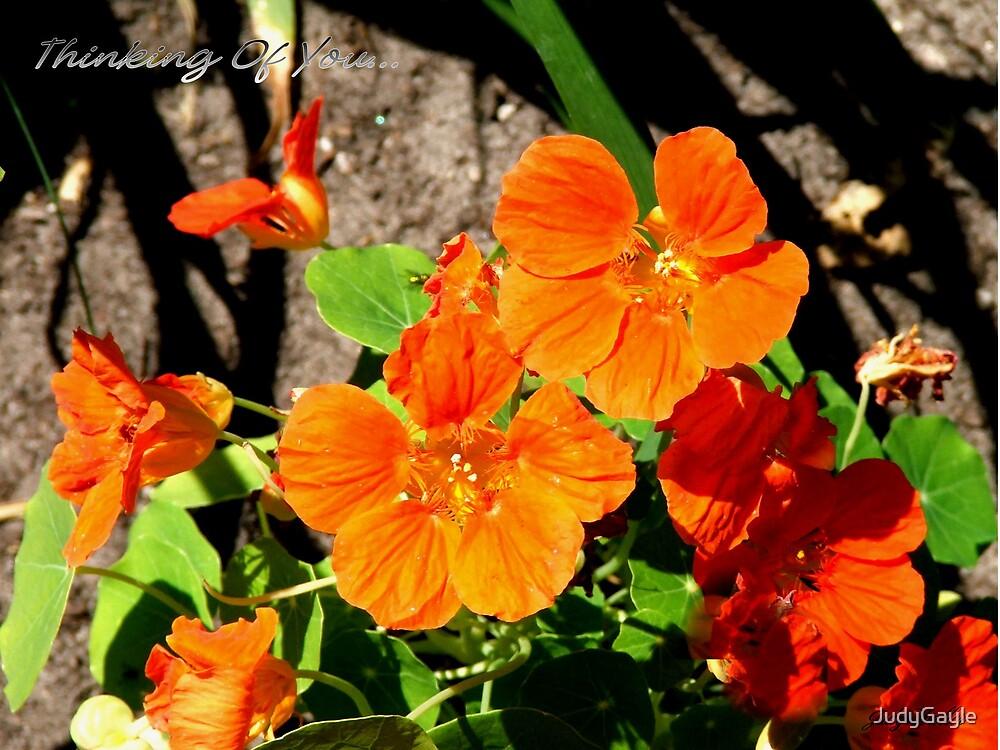 Orange Beauties by Judy Gayle Waller