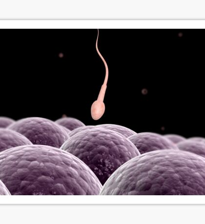 Conceptual image of fertilization. Sticker