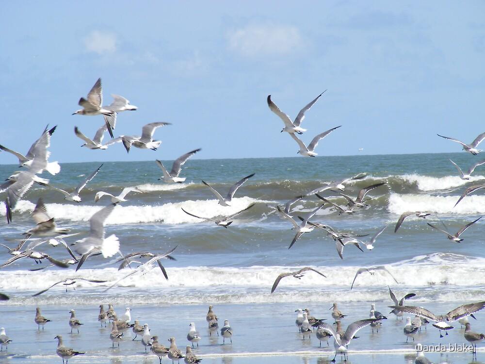 birds by wanda blake
