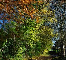 Autumn, a lane in West Burton. by Johnstonphotos