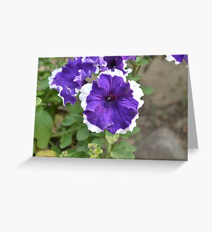 Beautiful Unknown Violet & White Flower | Nature Photography Greeting Card