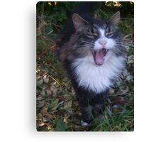 Shouting cat! Canvas Print