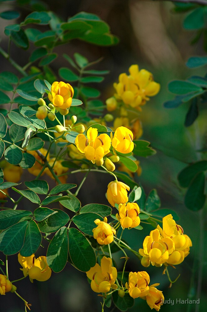 Yellow Flowers by J Harland
