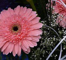 Pretty pink by noirerose