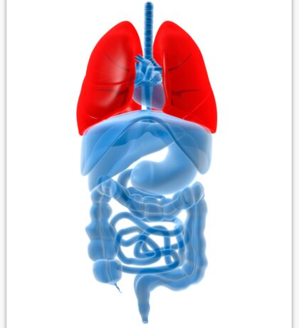 X-ray image of internal organs with lungs highlighted in red. Sticker