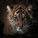 cub by Lisa  Kenny