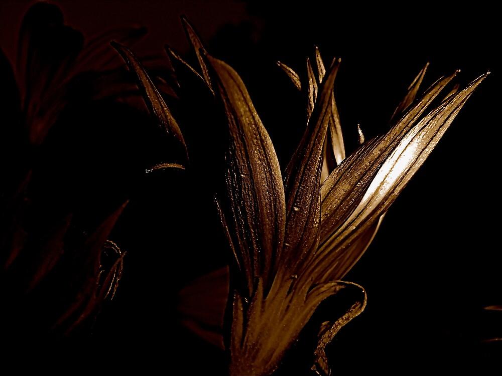 Bronzer by diongillard