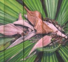 Fantail Palm Plateau (detail section) Sticker