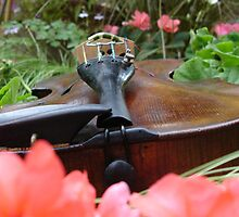 fiddle 1 by Wrigglefish