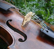 fiddle 6 by Wrigglefish