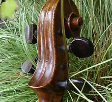 fiddle 8 by Wrigglefish