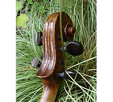 fiddle 8 Photographic Print
