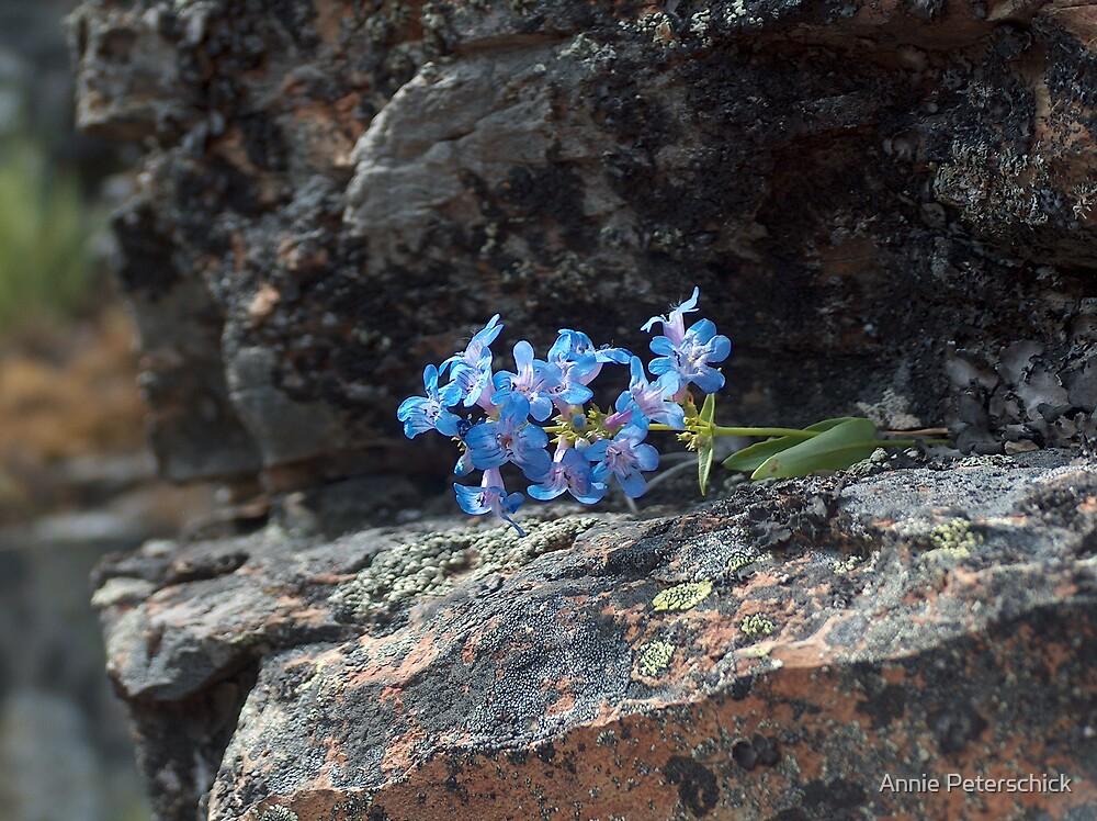 blue flowers  by Annie Peterschick