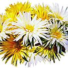 Yellow and White Mums by Susan Savad