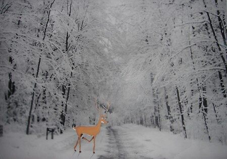 Out of my Deer by Chad  Schuety