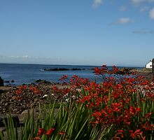Rocky Beach, Cellardyke, Fife. by Monkeyman