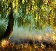 Artscape WillowTree on the Rhine..........Autumn 2013 by Imi Koetz