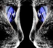 Blue Eyed Cat by quin10