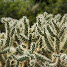 Jumping Cholla by Imagery