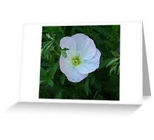 Primrose Greeting Card