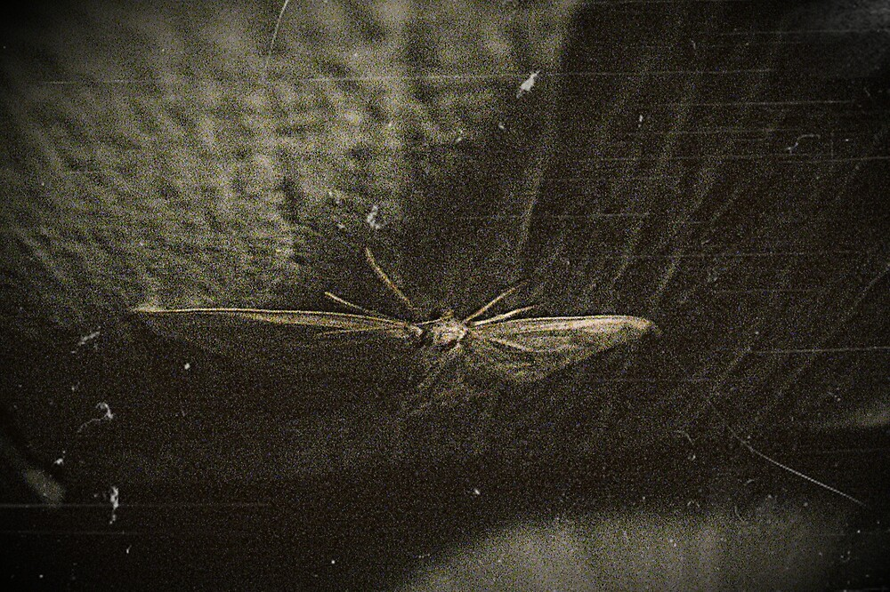 Moth by Tommy Seibold
