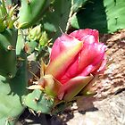 Cactus Rose by Dianna