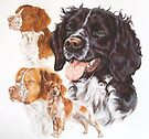 Brittany Spaniel by BarbBarcikKeith