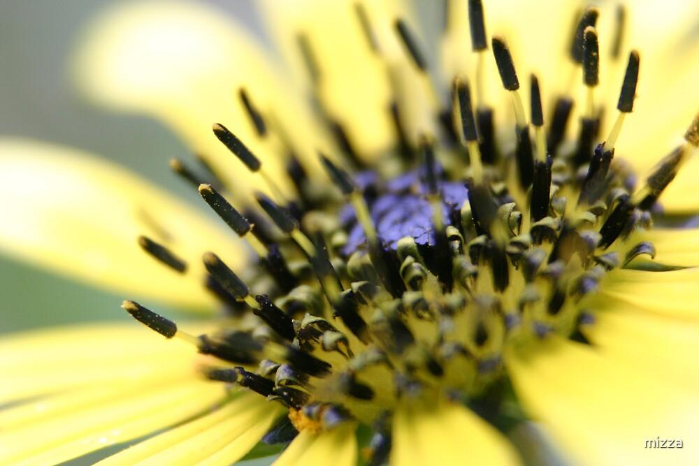 Wild Flower by mizza
