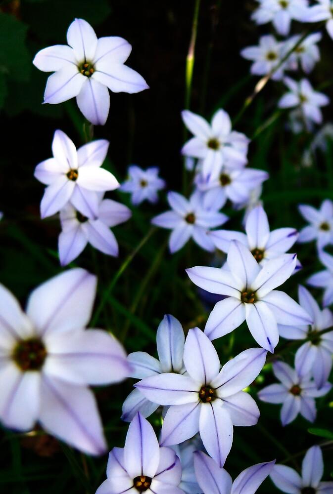 Starry Flowers by Samuel Gundry
