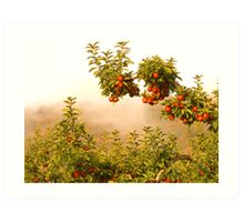 Apples & Fog Art Print