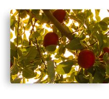 Apples & Leaves Canvas Print