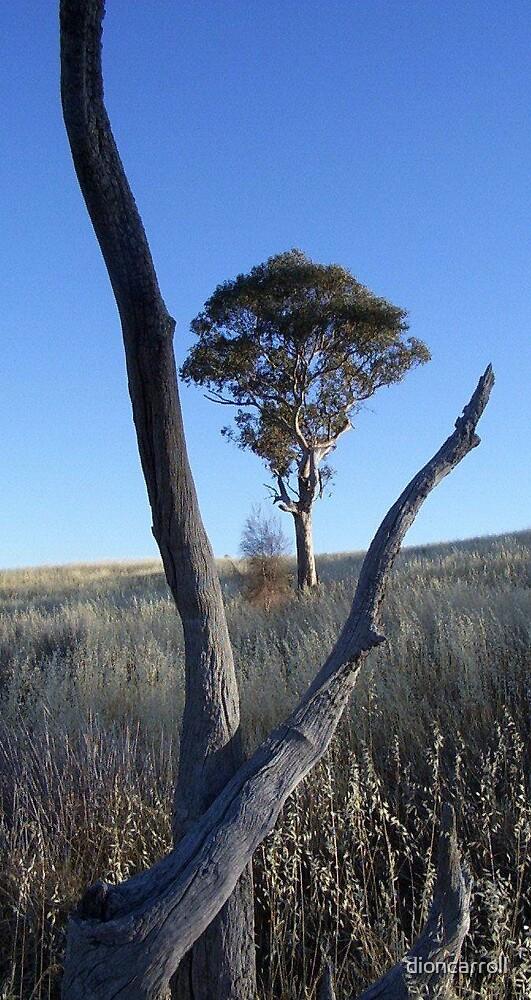 V-Tree by dioncarroll