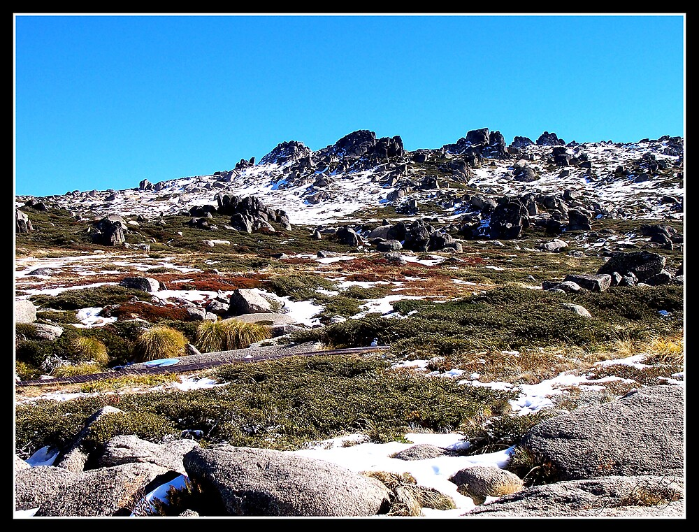 Kosciuszko Alpine Heath by Gerard Delany