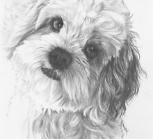 Cavachon by BarbBarcikKeith