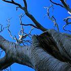Deadwood Tree by Chris Faithfull