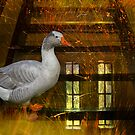 Goosy Goosy Gander Whither shall I wander by mawaho