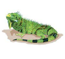Iguana by kurtmarcelle