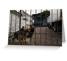 The Urban Way #7 - Pets Greeting Card