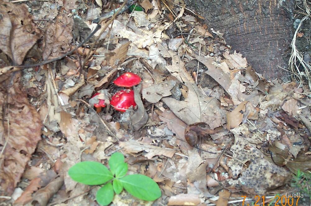 Mushroom by Luella