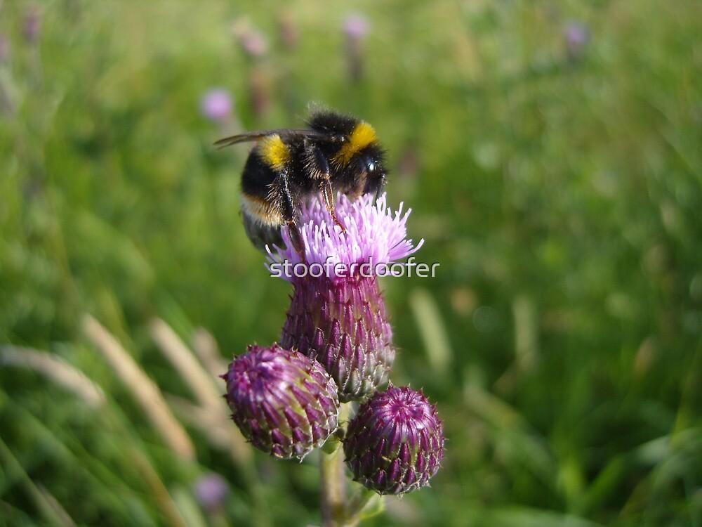 The Bee by stooferdoofer