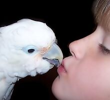 Cockatoo Kisses by byuchic