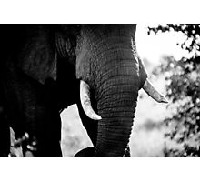 Abstract Elephant II Photographic Print