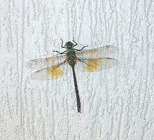 Dragon Fly by minniemanx