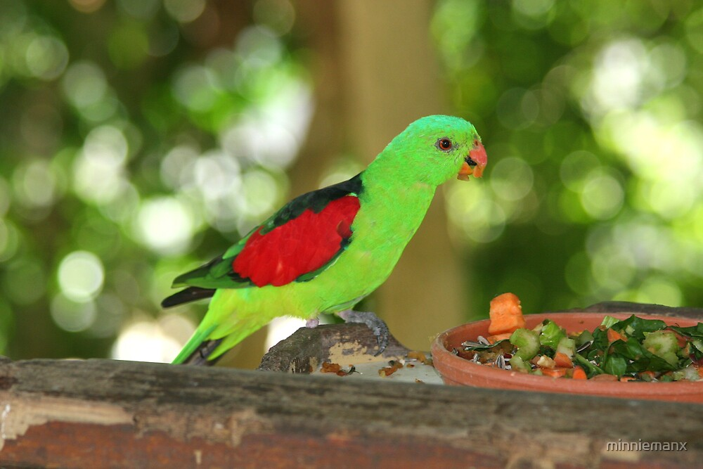 Red Wing Parrot by minniemanx