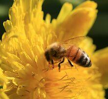 Golden Nectar by saharabelle