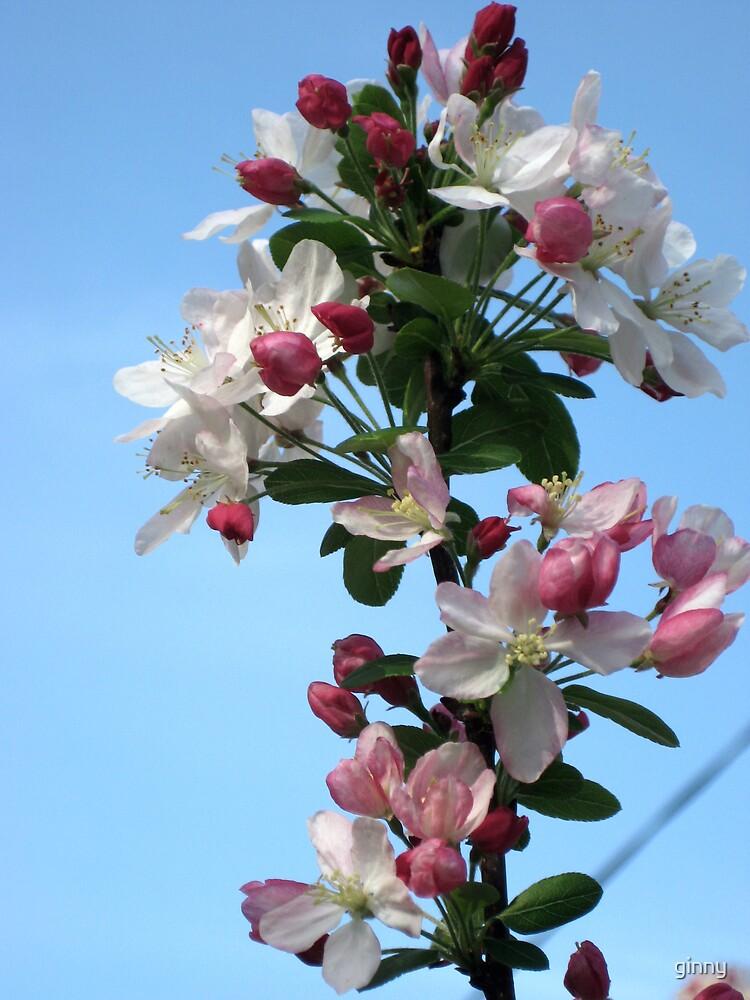confetti blossom by ginny