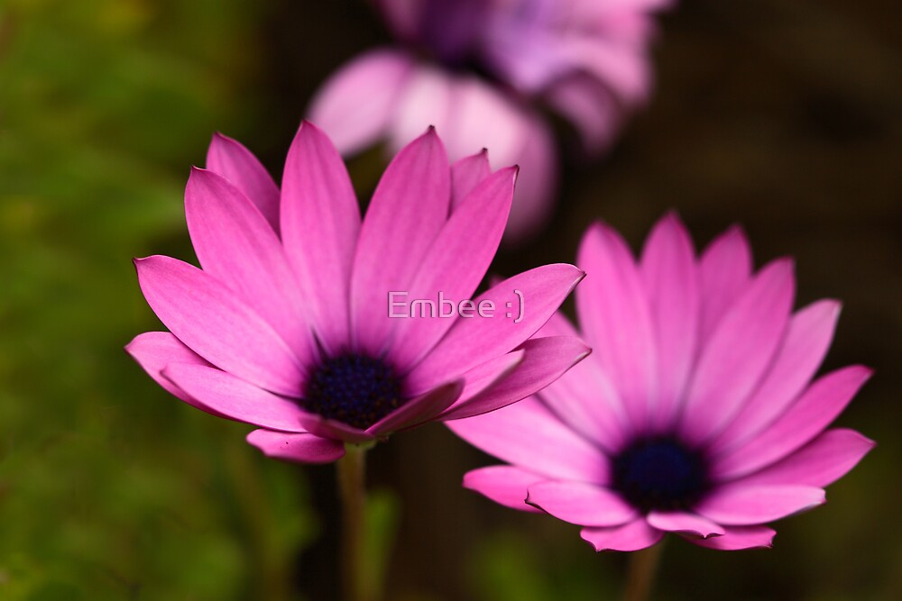 Pink perfection by momleeb