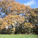 autumn color by brucemlong