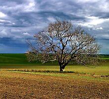 Rain's on the Way !! by Phil Thomson IPA
